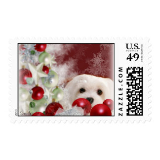 Snowdrop the Maltese Christmas Stamp