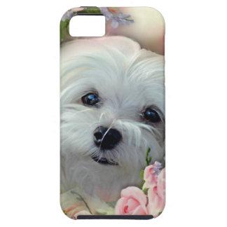 Snowdrop the Maltese iPhone SE/5/5s Case