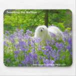 Snowdrop the Maltese Mousemats