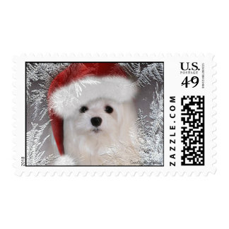 Snowdrop the Maltese Postage Stamp