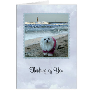 "Snowdrop the Maltese ""Thinking  of You Card"