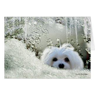 "Snowdrop the Maltese ""Thinking of You"" Card"