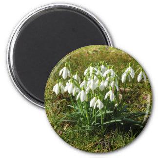 Snowdrops 02.2 (Schneegloeckchen) Magnet