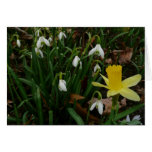 Snowdrops and Daffodil Early Spring Flowers Card