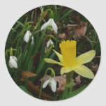 Snowdrops and Daffodil Early Spring Flowers Classic Round Sticker