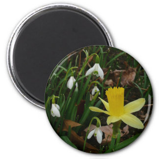 Snowdrops and Daffodil Early Spring Flowers Magnet