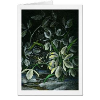 Snowdrops at Night Card