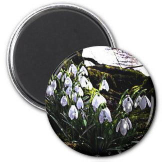 Snowdrops by River Hafren Fridge Magnet
