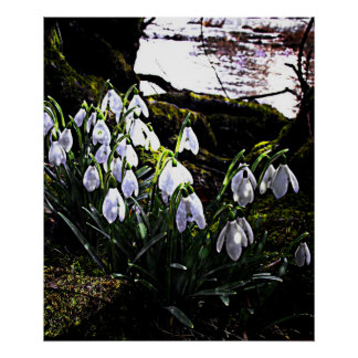 Snowdrops by River Hafren Print
