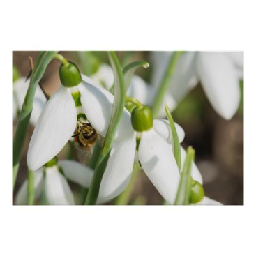 Art Themed Snowdrops flowers poster