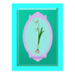 """snowdrops""""Galanthus"""" Post Cards"""
