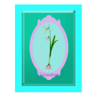 "snowdrops""Galanthus"" Postcard"