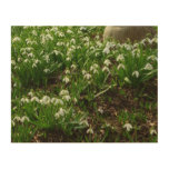 Snowdrops II (Galanthus) White Spring Flowers Wood Wall Art