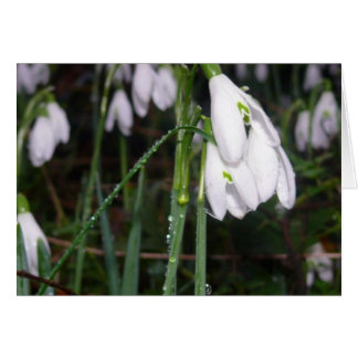 Snowdrops In The Garden Card