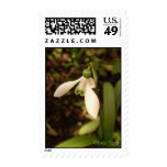 Snowdrops Postage Stamp
