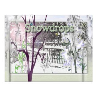 snowdrops postcard