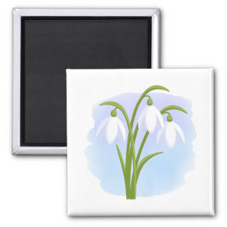 Snowdrops - Spring Flowers on Watercolor Blue Magnet