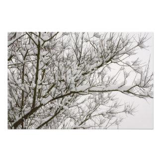 snowed branches photo print