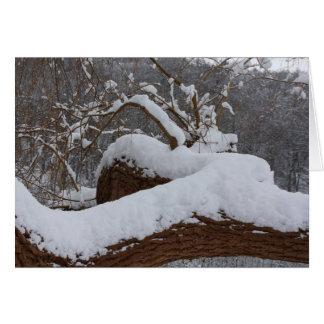 snowed tree branch card