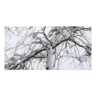 snowed willow card