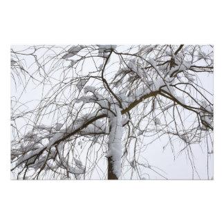 snowed willow photo print
