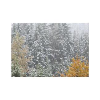 Snowfall in Whistler, B.C. Canvas Prints