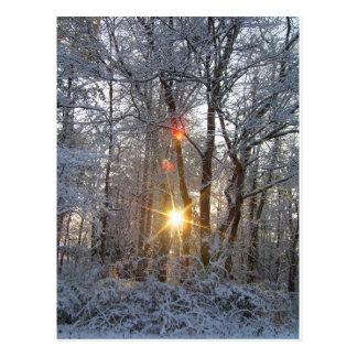 Snowfall Sunrise CricketDiane Snowy Forest Sun Postcard