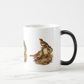 Snowfinch Coffee Mugs