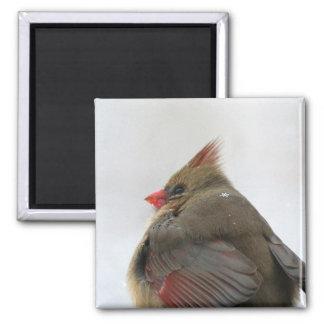 Snowflake Cardinal Magnet
