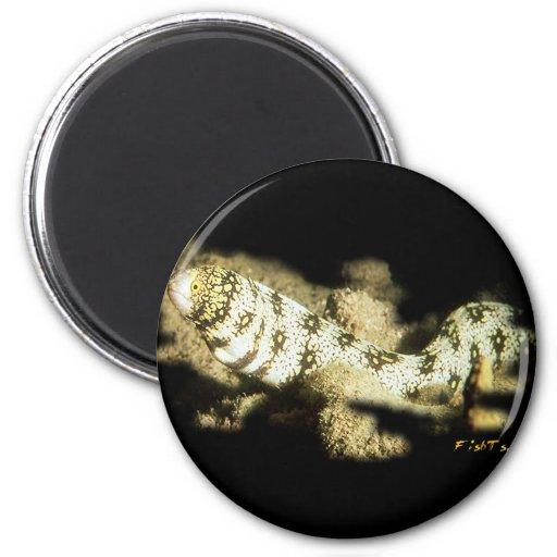 Snowflake Eel Magnet