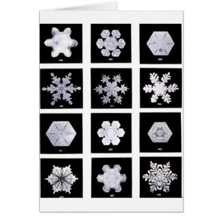 Snowflake Plates Weather Photography Card