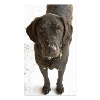 Snowflake Sprinkled Chocolate Labrador Retriever Double-Sided Standard Business Cards (Pack Of 100)