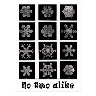 Snowflakes de Wilson Bentley, 1902 Tarjeta Postal