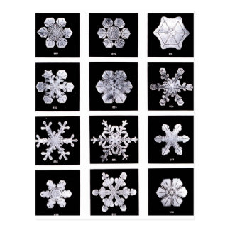 Snowflakes Post Card