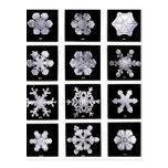 Snowflakes Postcard