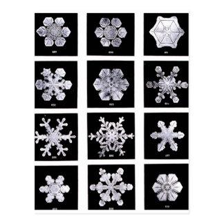 Snowflakes Post Card