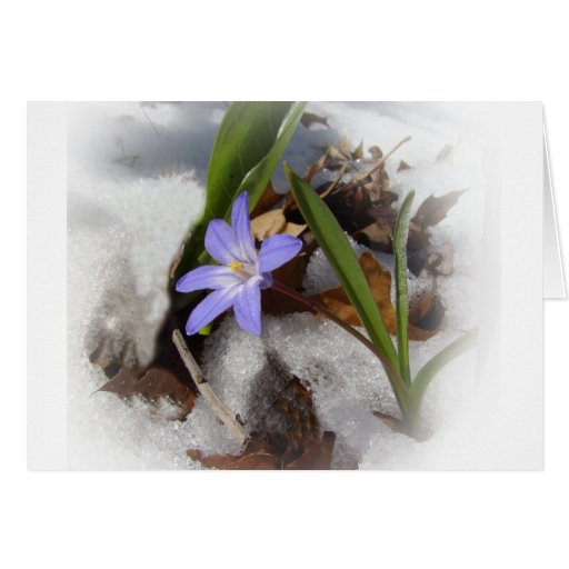 Snowflower púrpura tarjetón