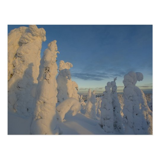 Snowghosts at sunset at Whitefish Mountain 2 Postcard