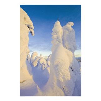 Snowghosts at sunset at Whitefish Mountain Photo Print