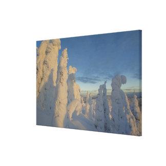 Snowghosts en la puesta del sol en la montaña 2 de lona envuelta para galerias
