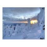Snowghosts en la puesta del sol en la montaña del postal