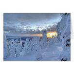 Snowghosts en la puesta del sol en la montaña del  tarjetón