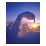 Snowghosts in the Whitefish Range of Montana Art Photo