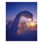 Snowghosts in the Whitefish Range of Montana Print