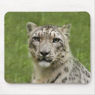 SnowLeopardBCR009 Alfombrilla De Raton
