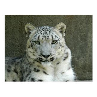 SnowLeopardM002 Postcard