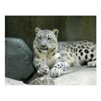 SnowLeopardM003 Postcard