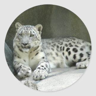 SnowLeopardM003 Classic Round Sticker