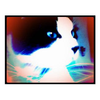 snowshoe cartoon like kitty postcard