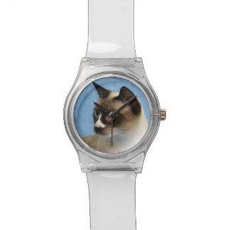 Snowshoe cat watch
